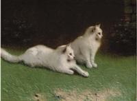 due gatti bianchi by beno boleradszky