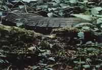 antizipierte gürteltiere by lothar baumgarten