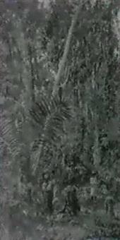 im tropenwald by paul merwart