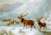stags in highland snow by byron webb