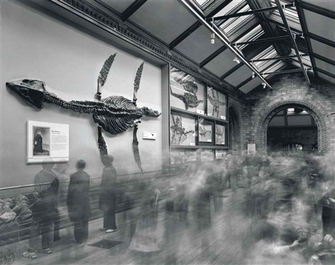 fossils natural history museum by matthew pillsbury
