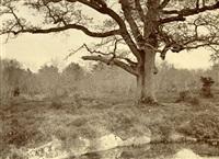 étude d'après nature (chêne)(study) by achille quinet