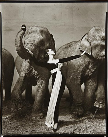 dovima with elephants evening dress by dior cirque dhiver paris by richard avedon