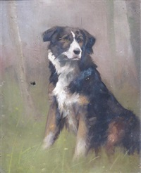 study of a sheepdog by maud earl