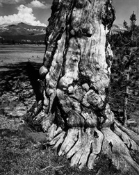 tuolumne meadows, plate 14 by ansel adams