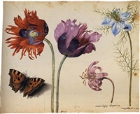 a sheet of flowers: two opium poppies, a lily and a love-in-a-mist, with a beetle and a tortoiseshell butterfly by jacques le moyne (de morgues)