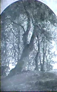 arbres by antoine eugène ernest buttura