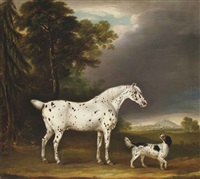 cheval appaloosa et épagneul by thomas weaver