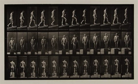 animal locomotion an electro photographic investigation of consecutive phases of animal movements 15 works by eadweard muybridge