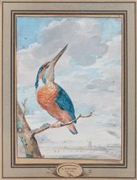 martin-pêcheur by aert schouman
