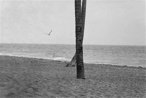 seagull and crossed trees daytona beach florida by elliott erwitt