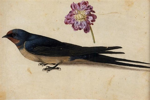 a swallow and a double gilliflower study by jacques le moyne de morgues