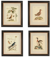 birds (after george edwards) (+ 9 others; 10 works) by johann michael seligmann