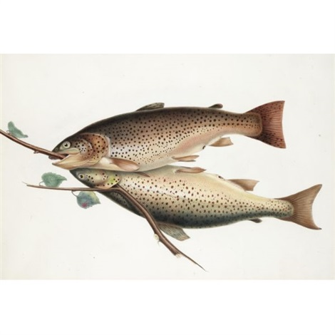 brown trout by william sir jardine editor