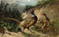 pheasant by frederick von luerzer