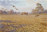 over the stubble, partridges by john cyril harrison