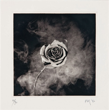 untitled rose by robert mapplethorpe