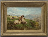 sheep grazing in the highlands by william r.c. watson