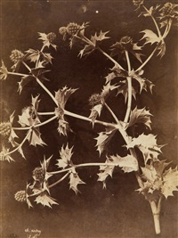 thistles, 1860s (2 works) by charles aubry