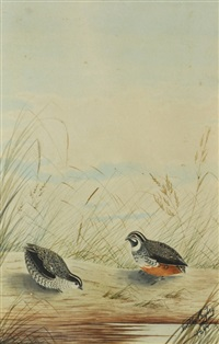 pair of quail by neville henry peniston cayley