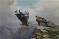 golden eagles over the black cullius hebrides, scotland by john cyril harrison