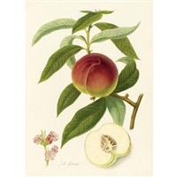pomona londinesis (vol. i w/ 49 works; 4to) by william hooker