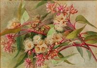 eucalyptus gunni by theresa maria hegg