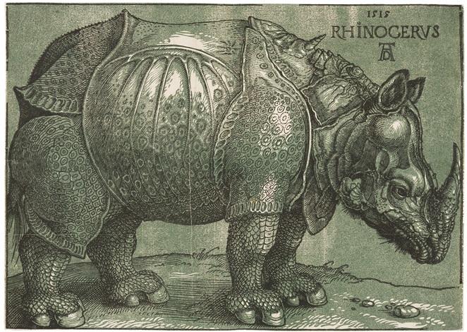 das rhinozeros by albrecht dürer