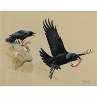 preying crows by james fenwick lansdowne
