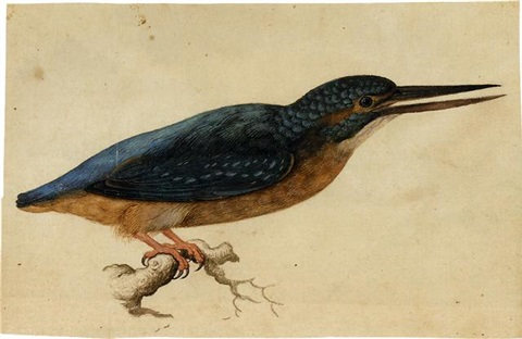 a kingfisher on a branch by jacques le moyne de morgues