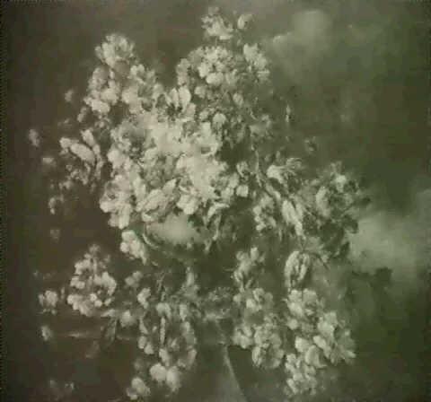 blumen in steinvase by fausto antonioli