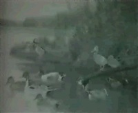 surface feeding ducks, from game birds of north america by douglas allen