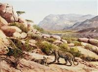 leoparden im gebirge by helmuth snethlage