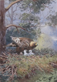 golden eagle with 2 eaglets by john cyril harrison