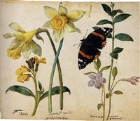 flowers: a gilliflower, two wild daffodils, a lesser periwinkle and a red admiral butterfly (study) by jacques le moyne (de morgues)