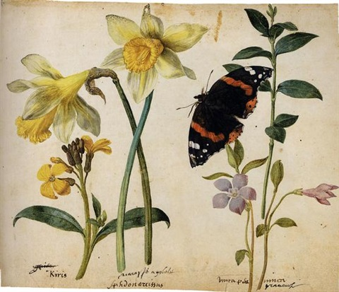 flowers a gilliflower two wild daffodils a lesser periwinkle and a red admiral butterfly study by jacques le moyne de morgues