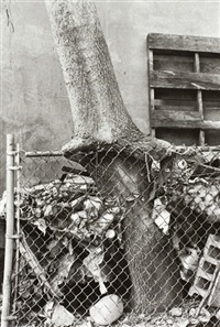 tree + fence out my back window by zoe leonard