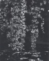 ohne titel (pflanzenaufnahme) by peter von cornelius