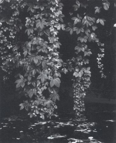 ohne titel pflanzenaufnahme by peter von cornelius