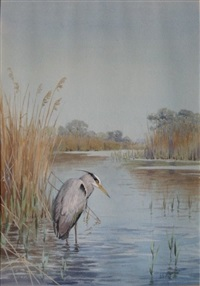heron by john cyril harrison