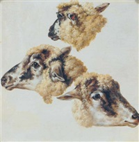 heads of sheep (study) by charles towne