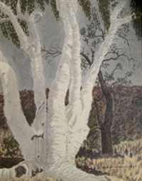 ghost gum by rex battarbee
