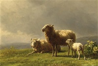 sheep in a meadow by jan bedijs tom