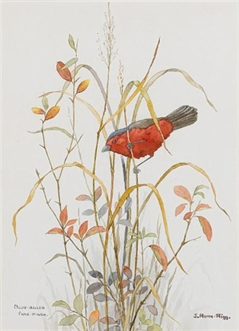 blue billed fire finch 5 others 6 works by j home rigg