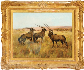 oryx antelopes by arthur wardle