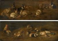 conigli (+ animali da cortile e porcellini d'india; 2 works) by giovanni agostino (abate) cassana