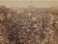 cuba: panorama de la havane, plantation de tabac, fermier, calèche, habitation (5 works) by charles (carlos) deforest fredricks