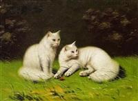 zwei weiße katzen by beno boleradszky