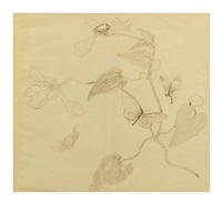 botanical study of two butterflies by émile gallé
