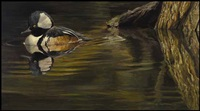 hooded merganser by robert bateman